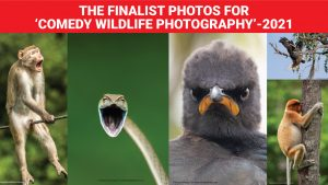 The Finalist Photos For 'Comedy Wildlife Photography'-2021